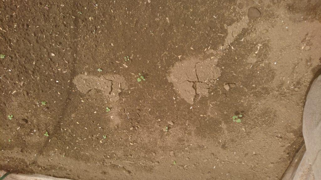 土の割れ目は目が出る知らせ