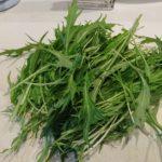 収穫した水菜