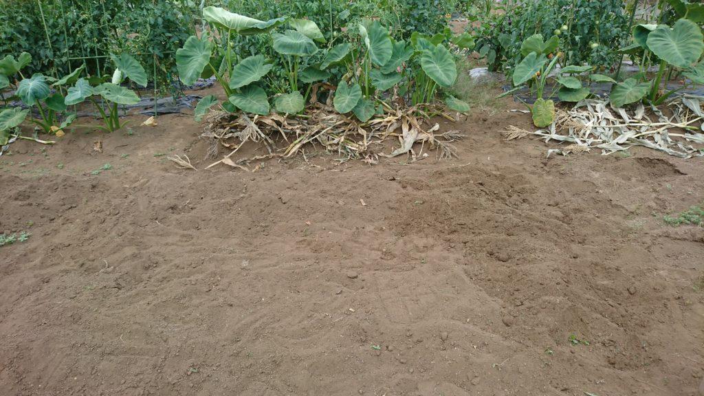 草むしりをしてすっきりした畝