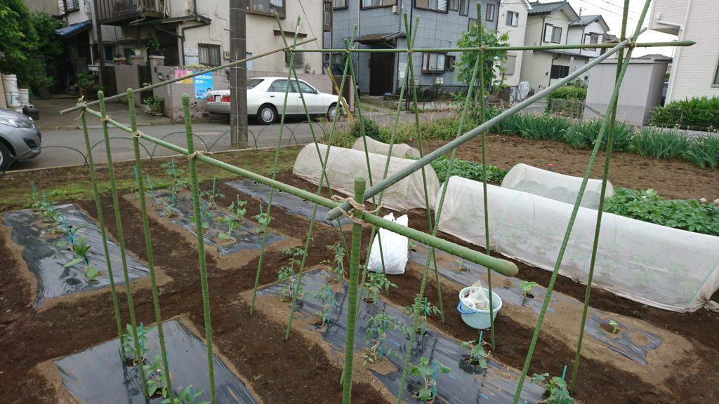 夏野菜の支柱立て完了