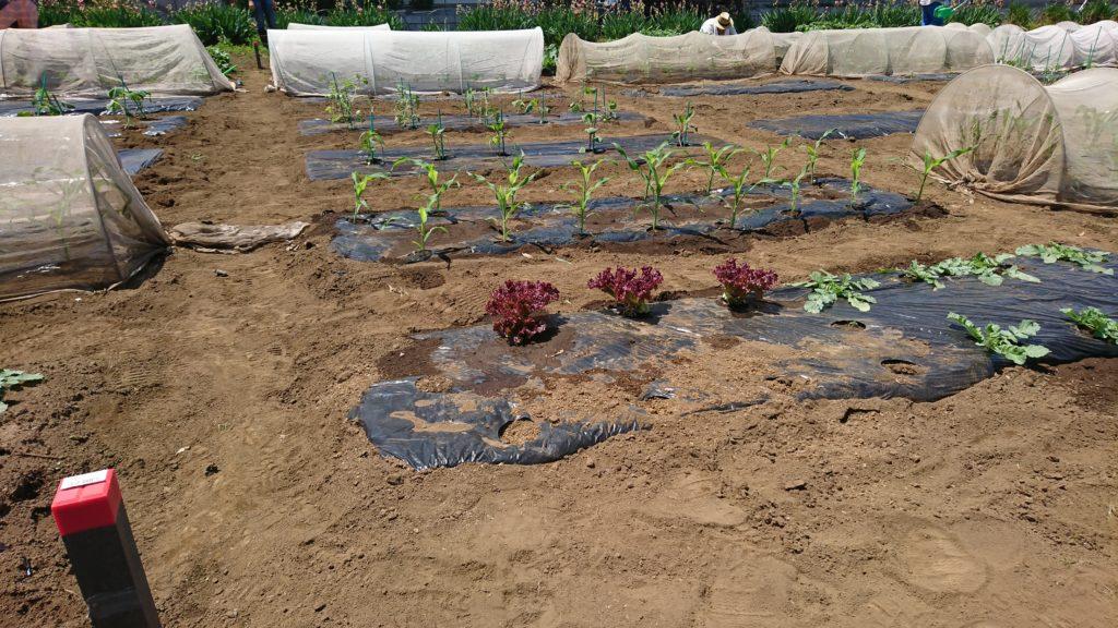 8つすべての畝が埋まりました