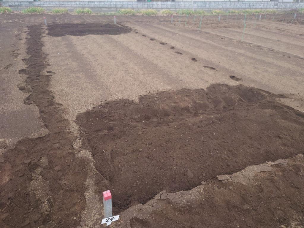 最初は3つの畝から始めます